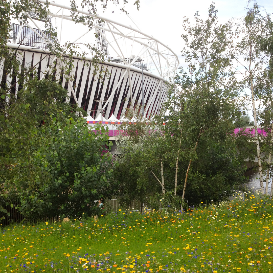 Meadow edge, Olympic Park, 2012