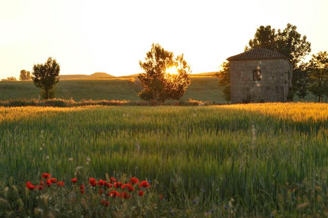 Sur le chemin entre Castrojeriz et Fromista, Castille
