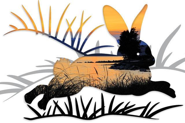 rabbit-06cd.jpg