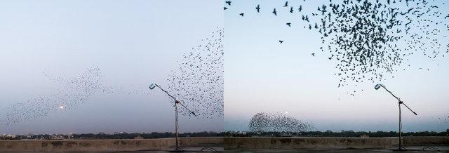 Birds_Diptych.jpg