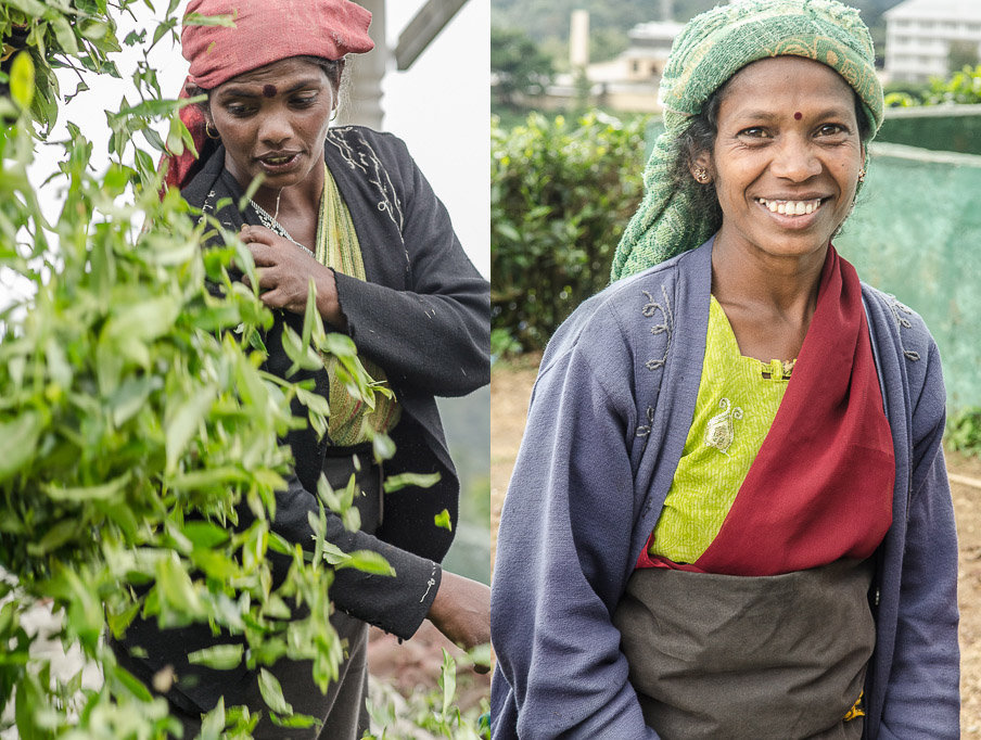 tea_picker_2.jpg