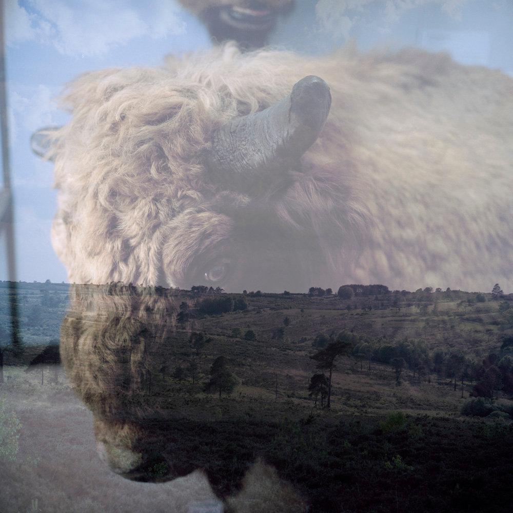 Rothschild_Overlay_bison.jpg