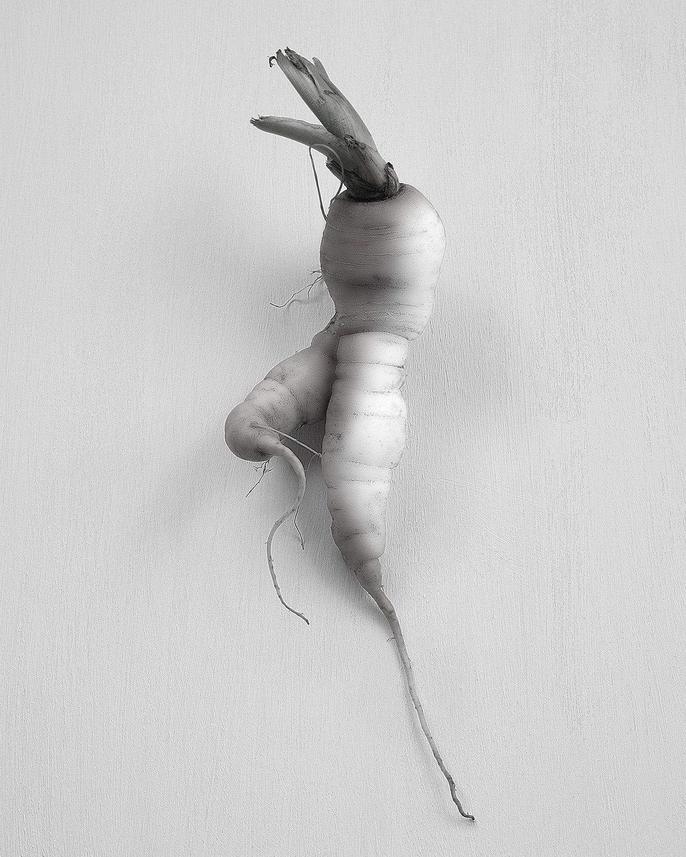 Carrots7508 V5.jpg