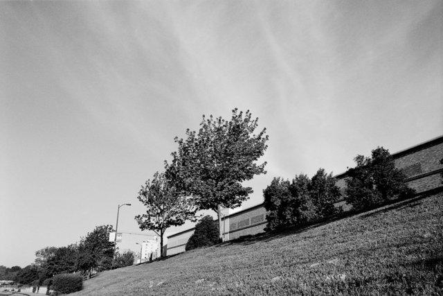 Tree on Hill - Kansas City, MO 2011
