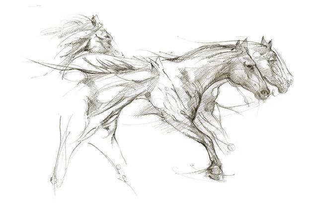 Narda__Mustangs@300.jpg