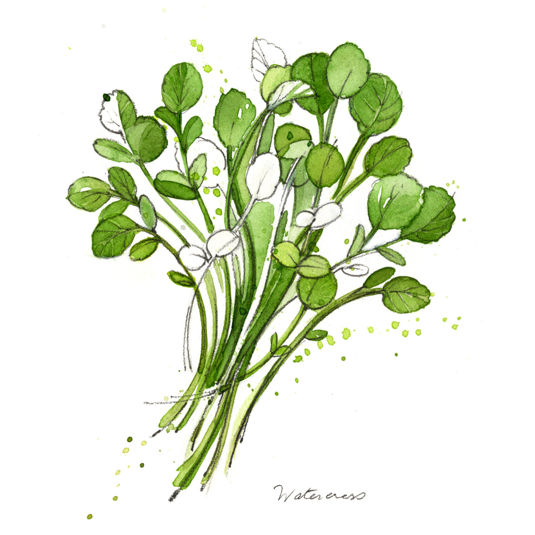 Narda_YETI.WildWatercress.jpg