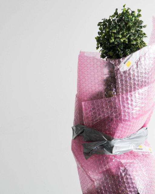 tree crop (1).jpg