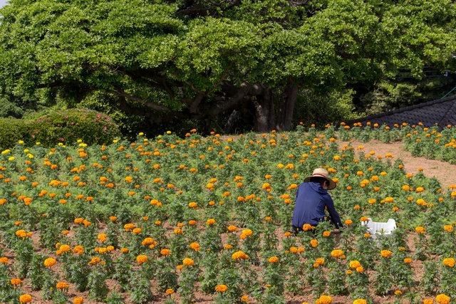 180515_Japan-0260.jpg