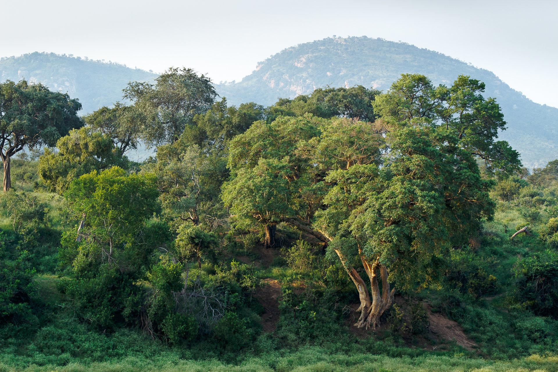 170301_SAfrica-1989PS.jpg