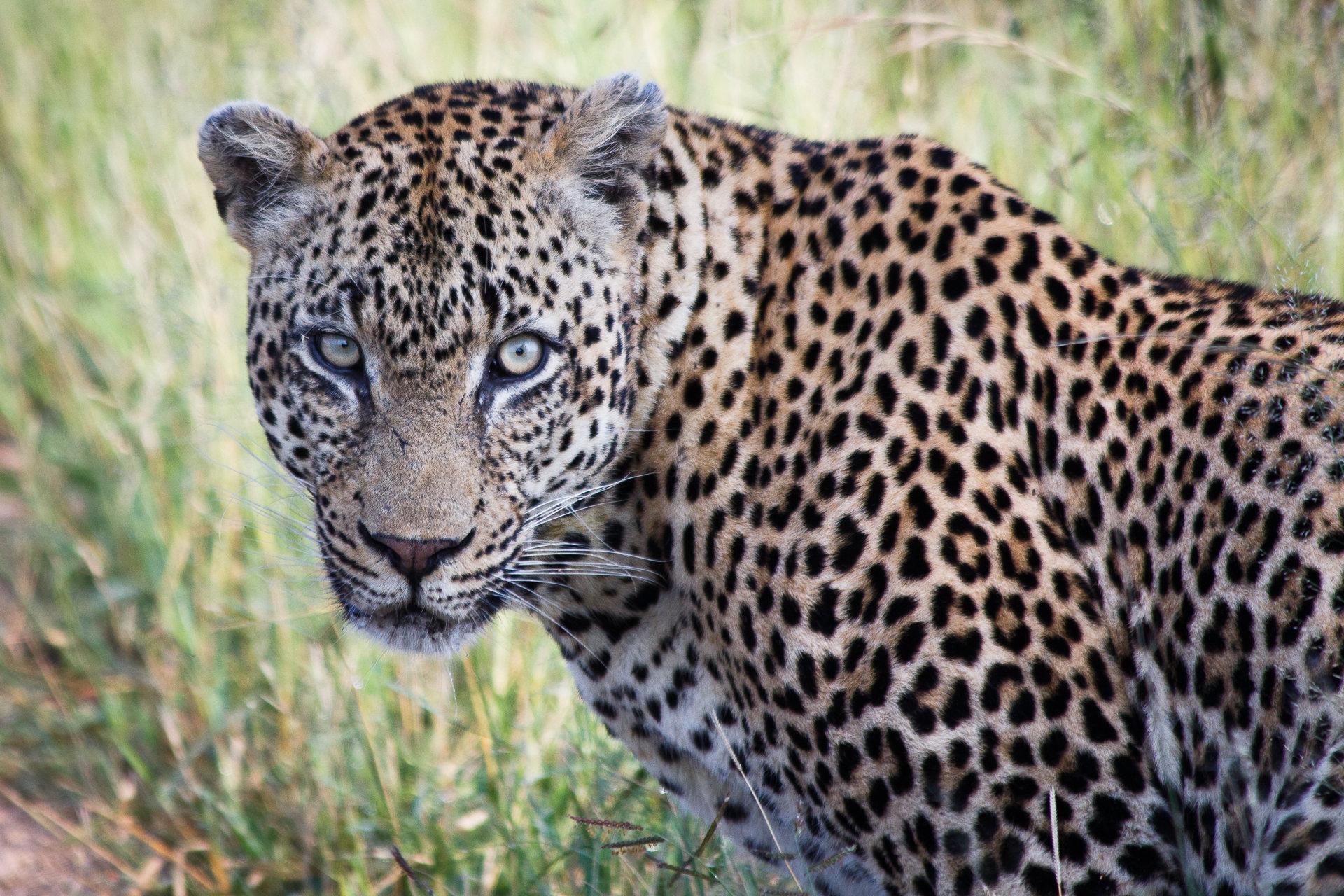 170301_SAfrica-1875.jpg