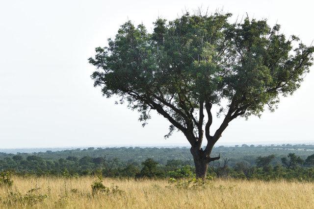170301_SAfrica-1816.jpg
