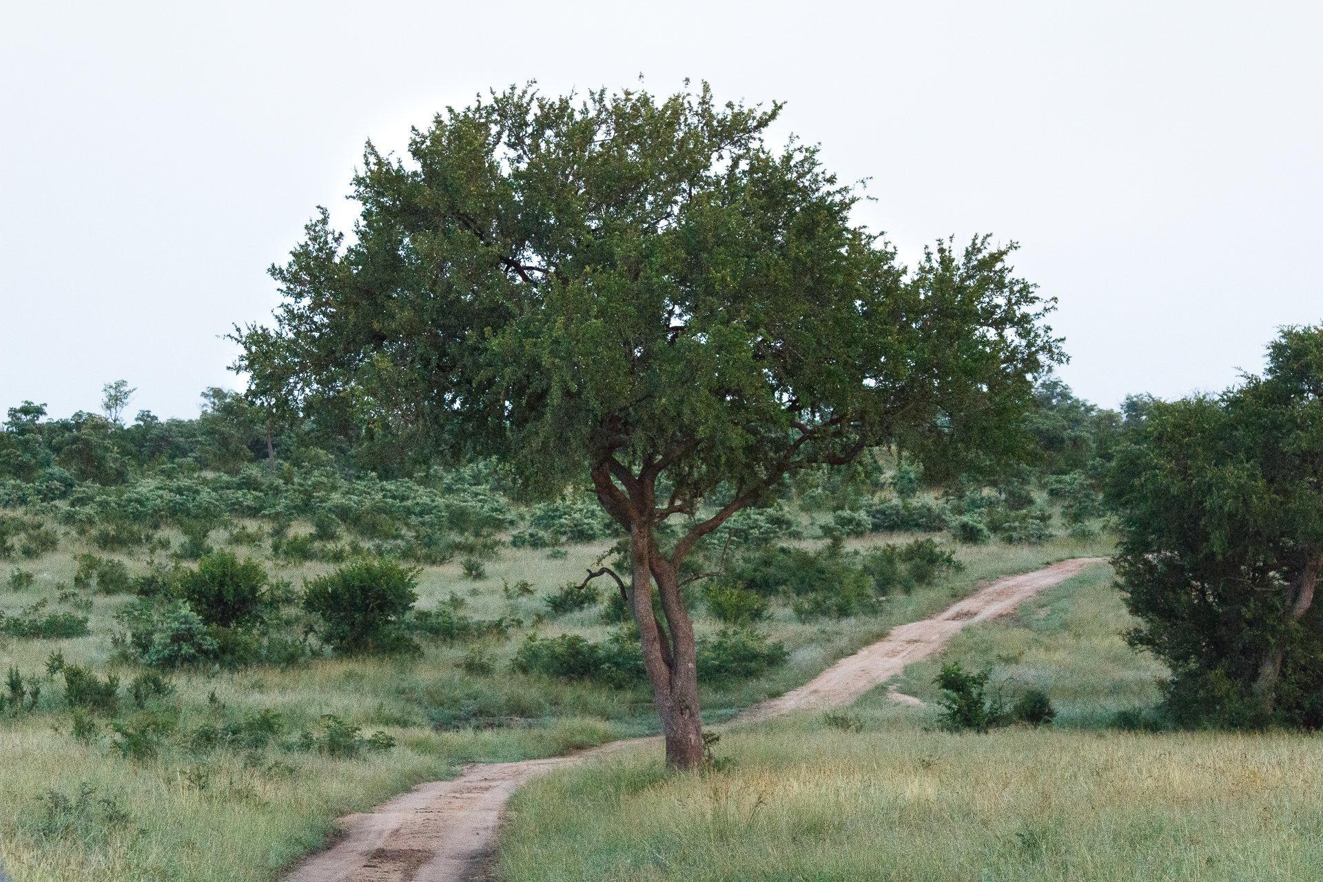 170301_SAfrica-1657.jpg