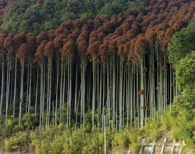 Saga City, Saga Prefecture, 2014.jpg