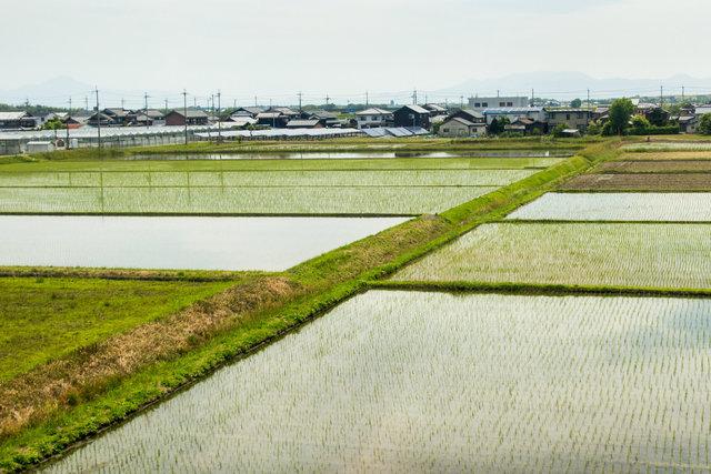 180524_Japan-0796.jpg