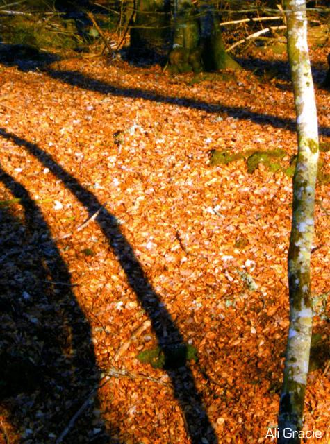 Woodland Shadows by Alison Gracie