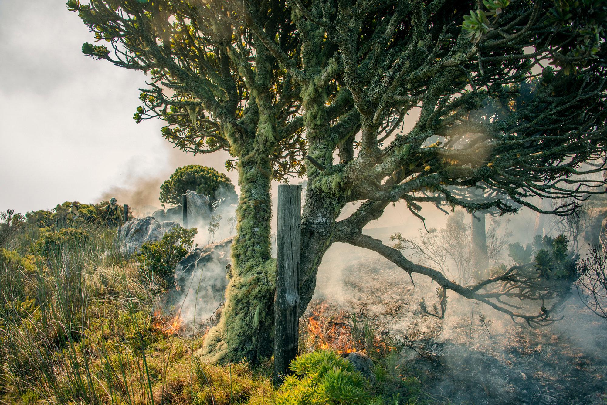 Lichen Tree I
