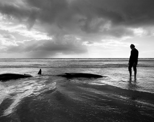 whales 007 FINALcopy.jpg
