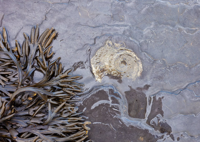 Fossil at Saltwick Bay