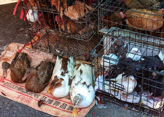 2012-05-20 Shanghai_444-1.jpg