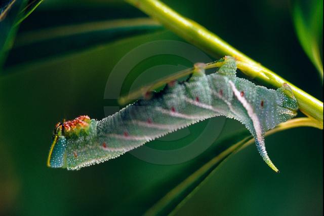 Tiere-Insekten-4.jpg