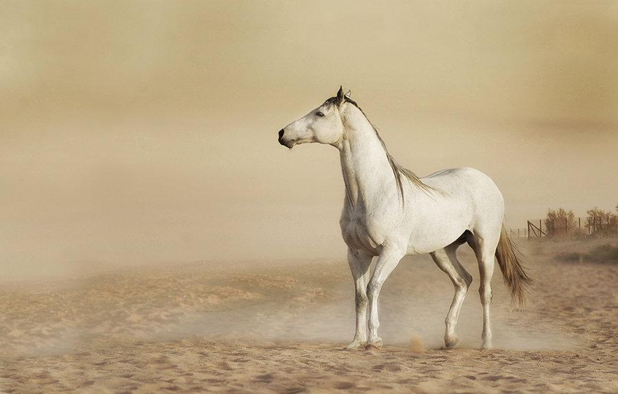 horses duts.jpg