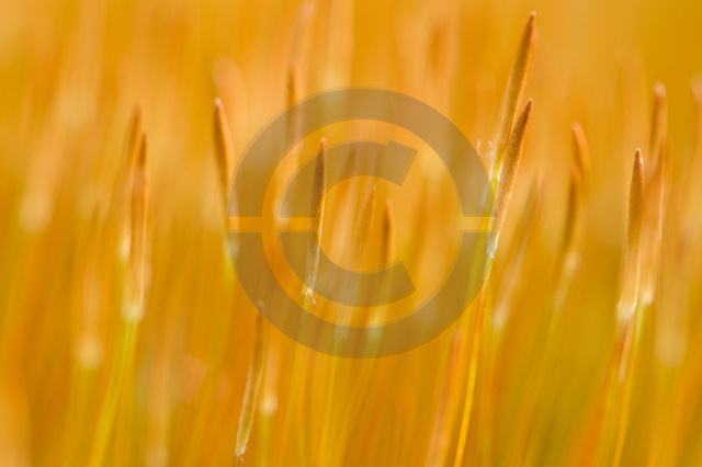 Pflanzen_Copyright_318.jpg