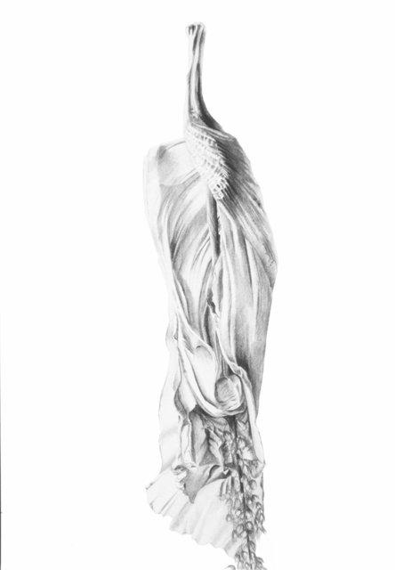 Hibiscus Untitled III