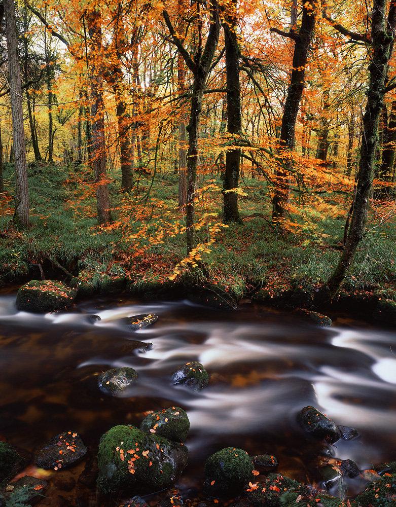 River Webburn