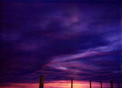 Violet Sunrise 5 by Alison Gracie