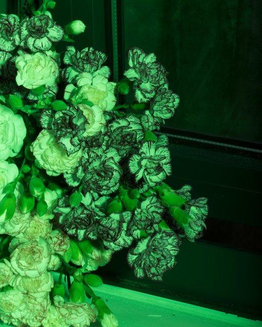 carnations crop.jpg