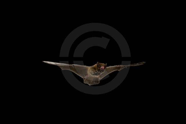 Tiere-Fledermaus-5.jpg