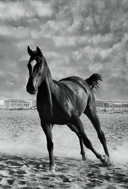 0610280356441portrait-horse-light.jpg
