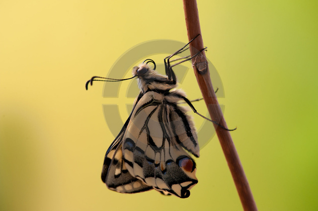 Insekten_Copyright_480.jpg