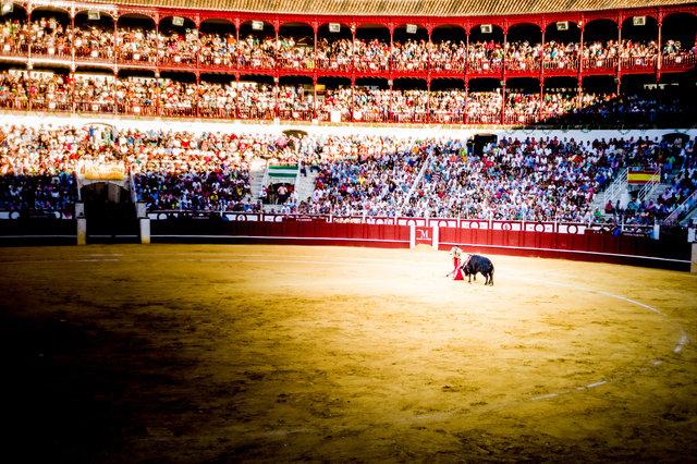 The Bullfight-101.jpg