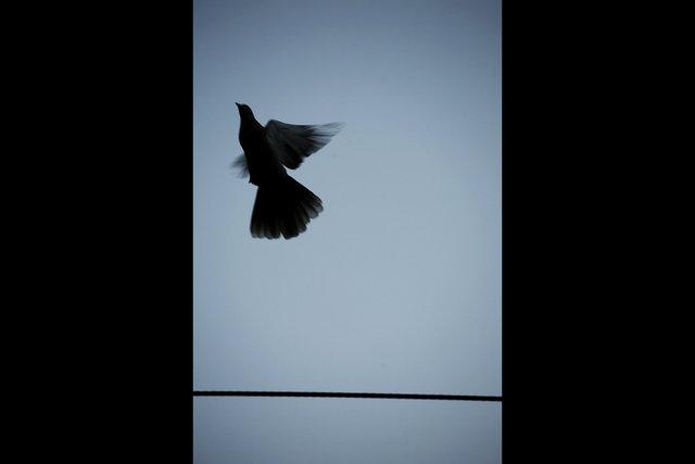 Bird_bucharest.jpg