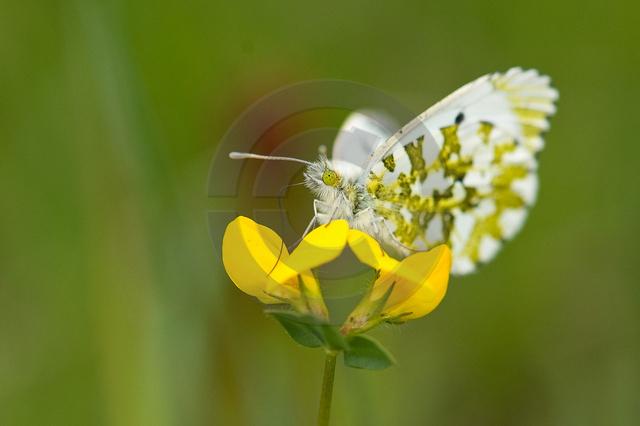 Insekten_Copyright_550.jpg