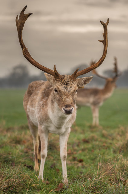Deers-5sparta.jpg