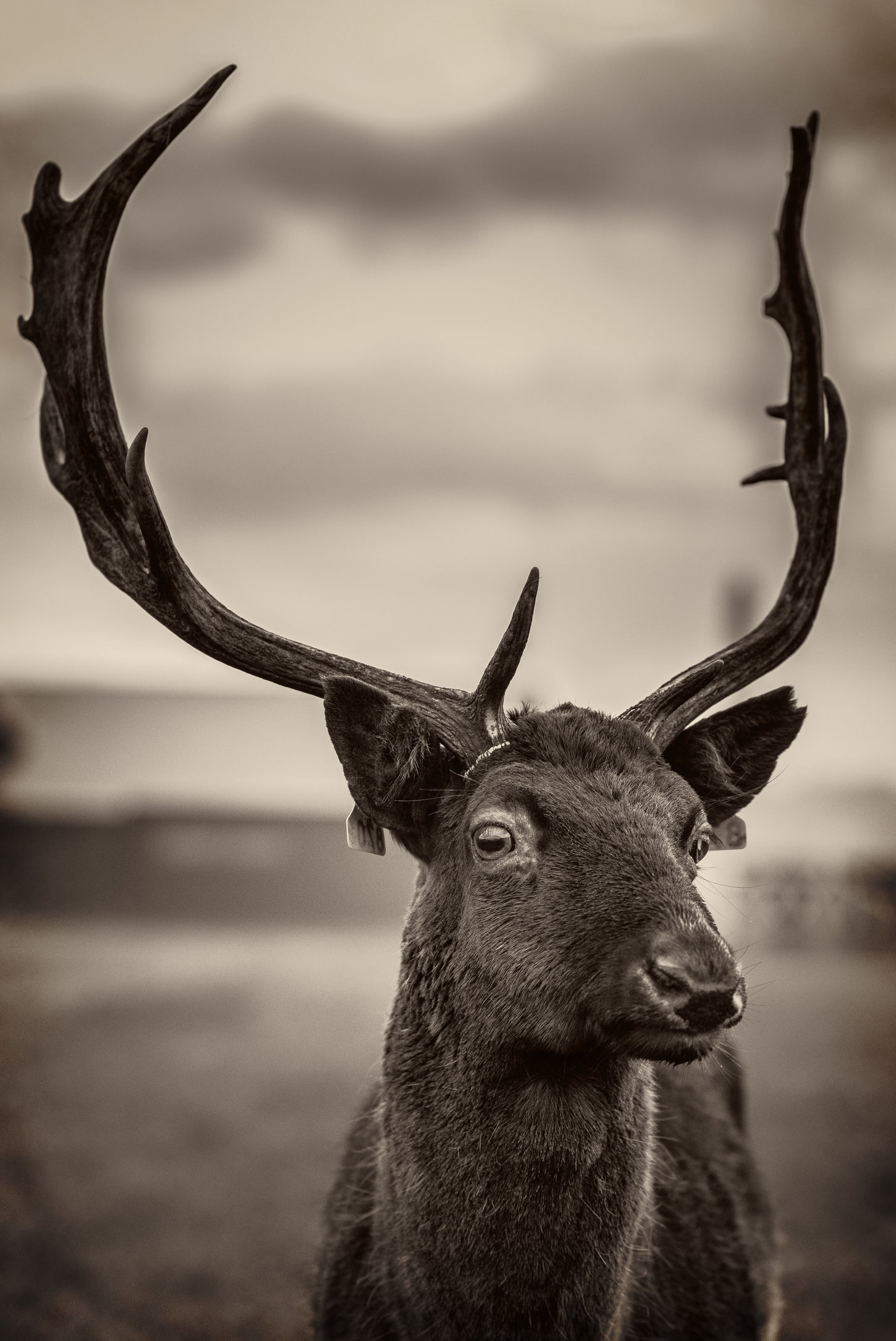 Deers-6homestead.jpg
