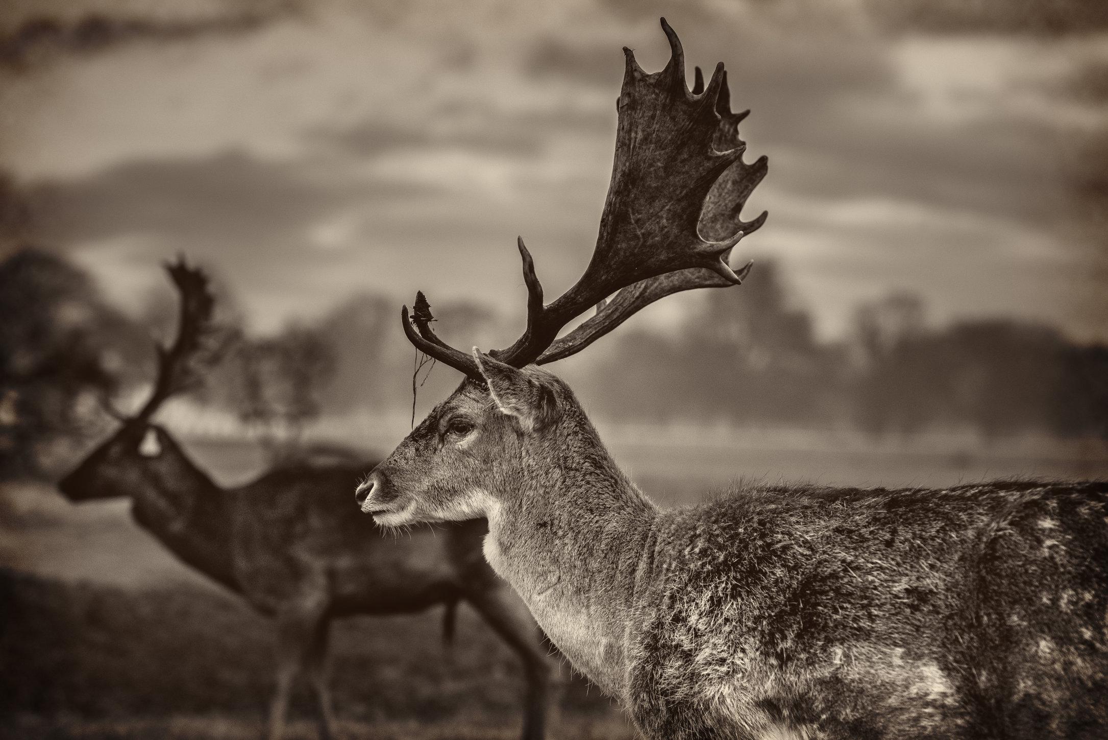 Deers-7homestead.jpg