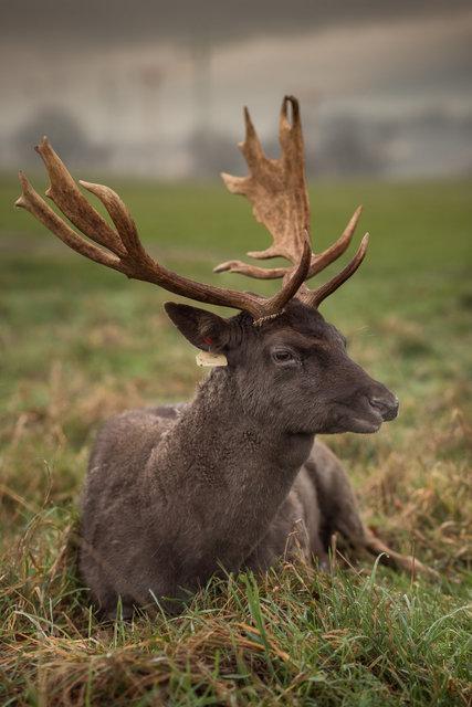 Deers-3sparta.jpg