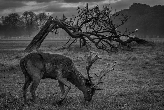 deers-4 6016 SIZE.jpg
