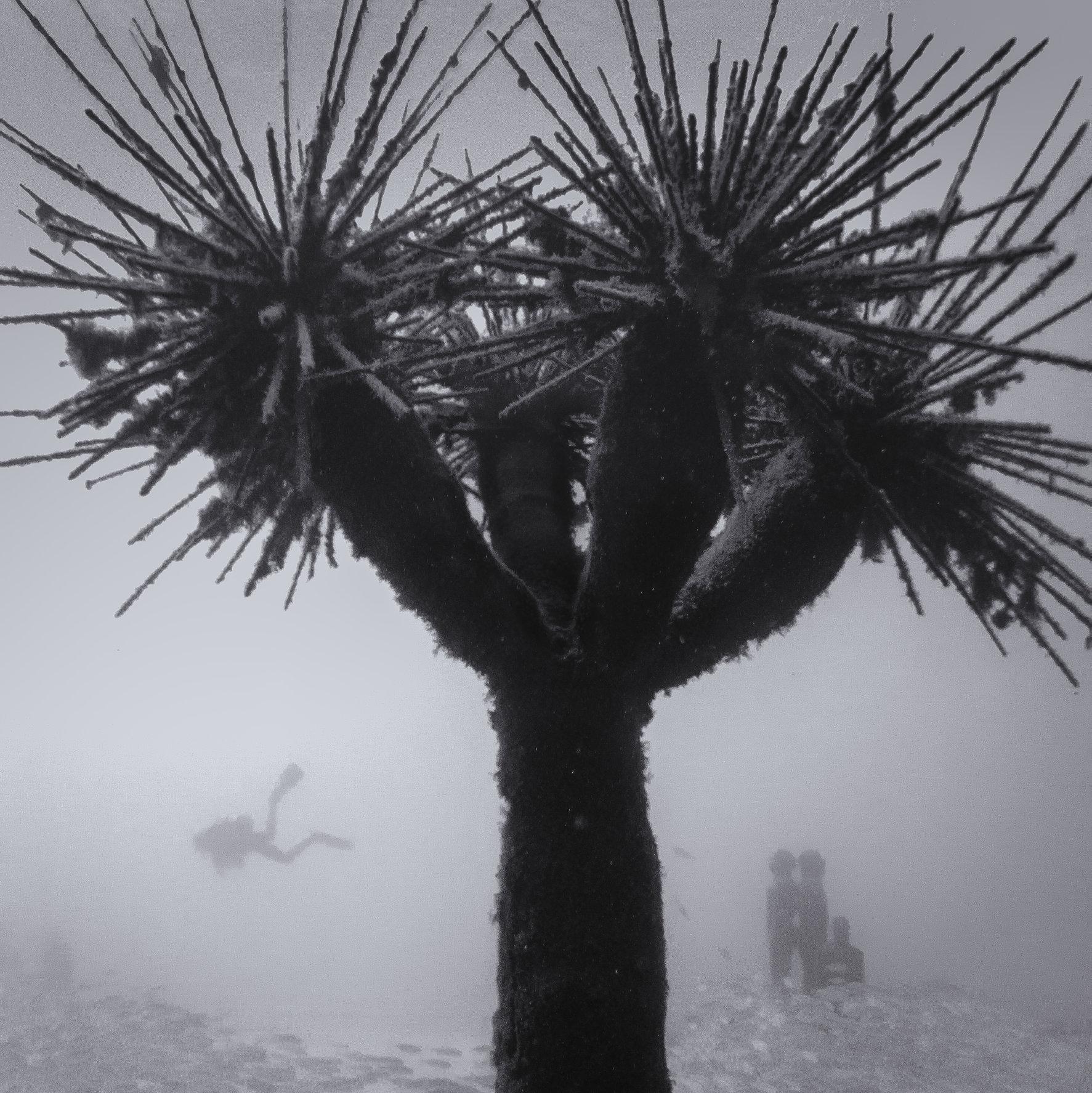 Underwater Palm Tree