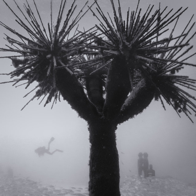 Underwater Palm Tree