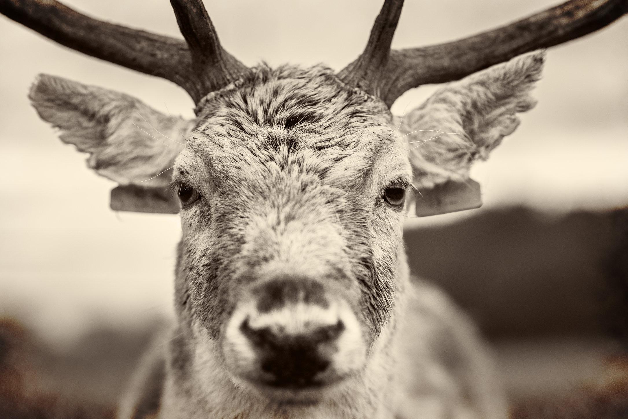 Deers-1 homestead.jpg