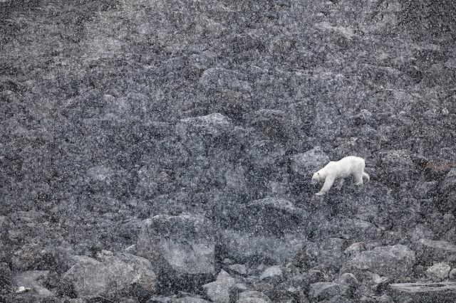 AMeniconzi_Svalbard_Sallyhamna_1527stk01.jpg