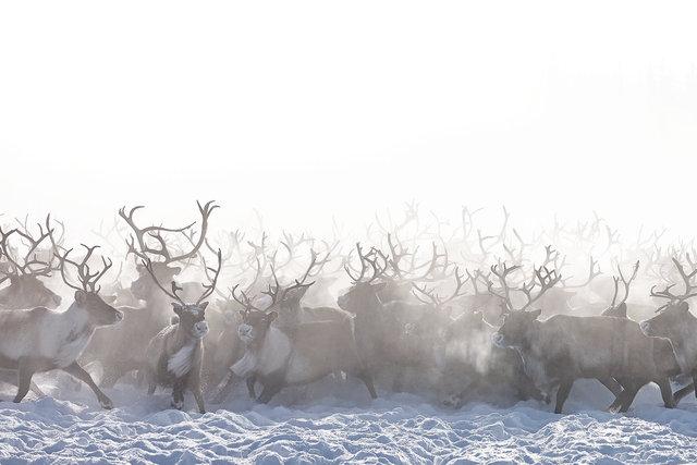 AMeniconzi_Siberia-Yamal_Nenets_3018xxstk-copy.jpg