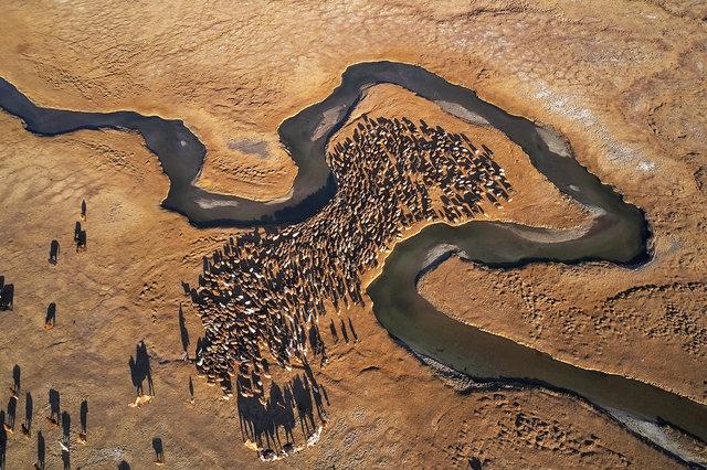 AMeniconzi_Mongolia_Altai_Damel_Migration_DJI_0653stk-copy.jpg