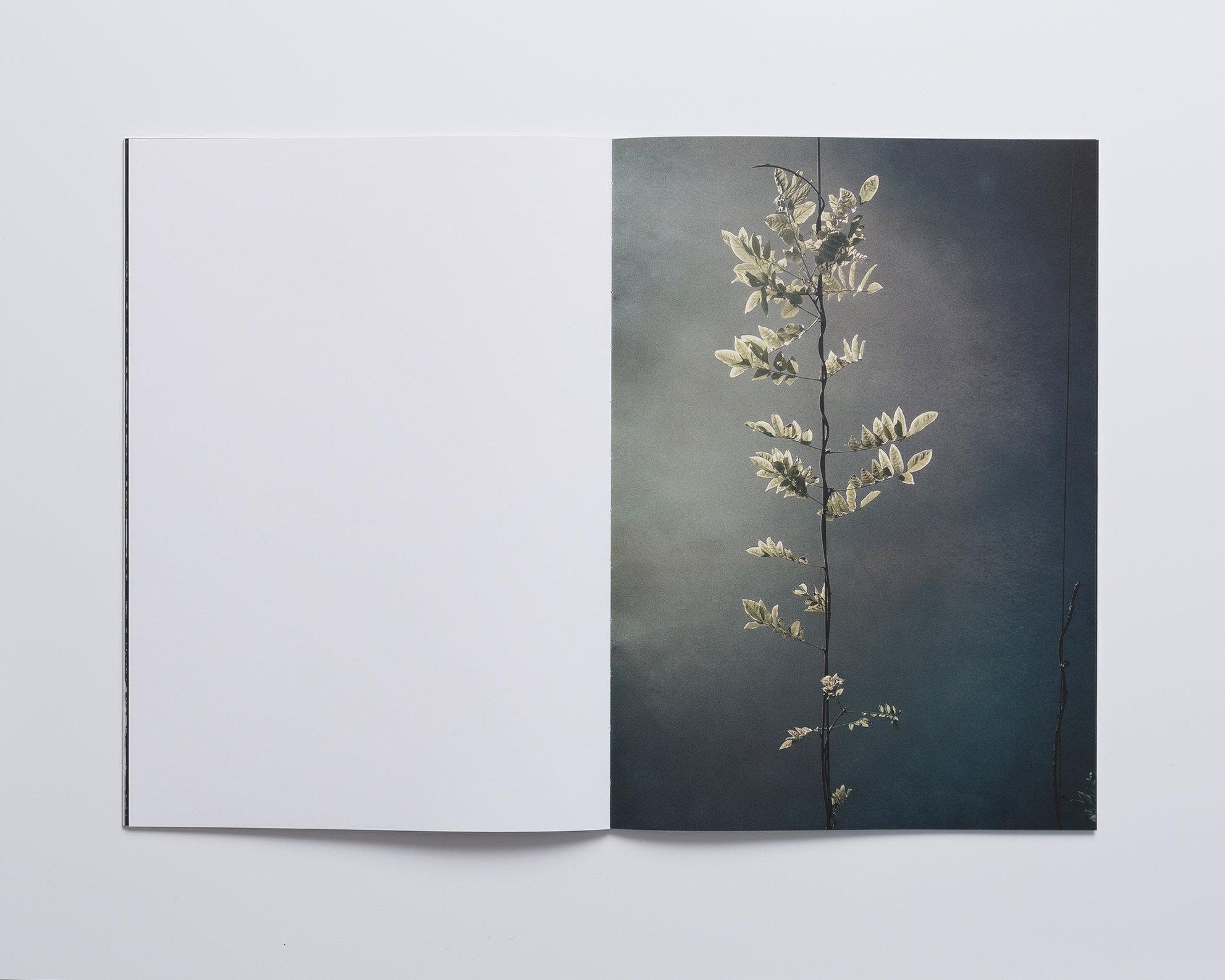 Anna den Drijver. Enchanted Blossom 3.jpg