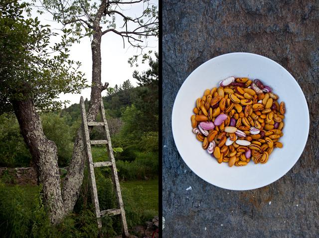 beans pair.jpg
