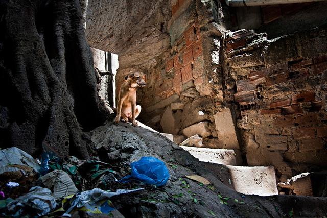 Dog Rocinha.jpg